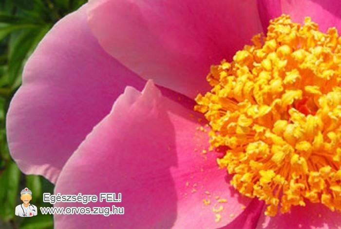 Virágpor - az allergia egyik okozója