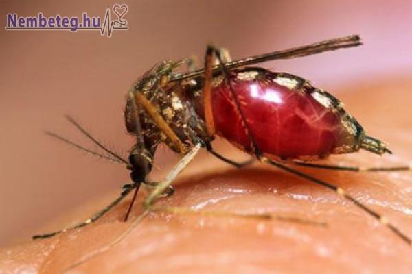 Malária (váltóláz), szúnyog által terjed