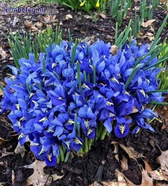Kék virágágyás