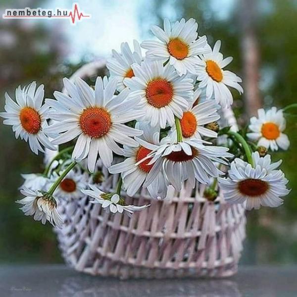 Virág kosár