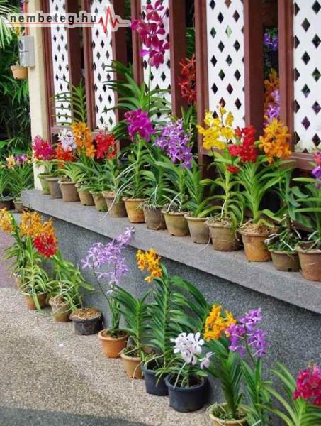 Stresszoldó cserepes virágok