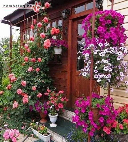 Rózsa-lugas