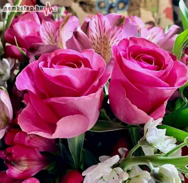 Rózsák, egészség