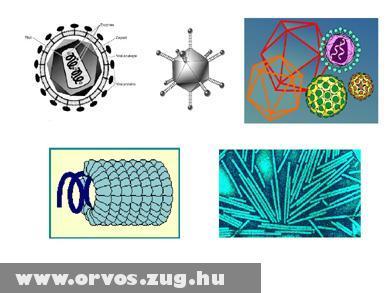 Vírus variációk