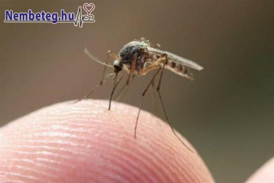 Szúnyogcsípés