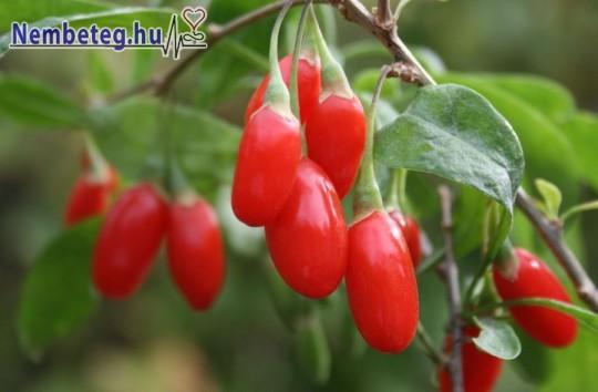 Goji-bogyó - gyógynövény